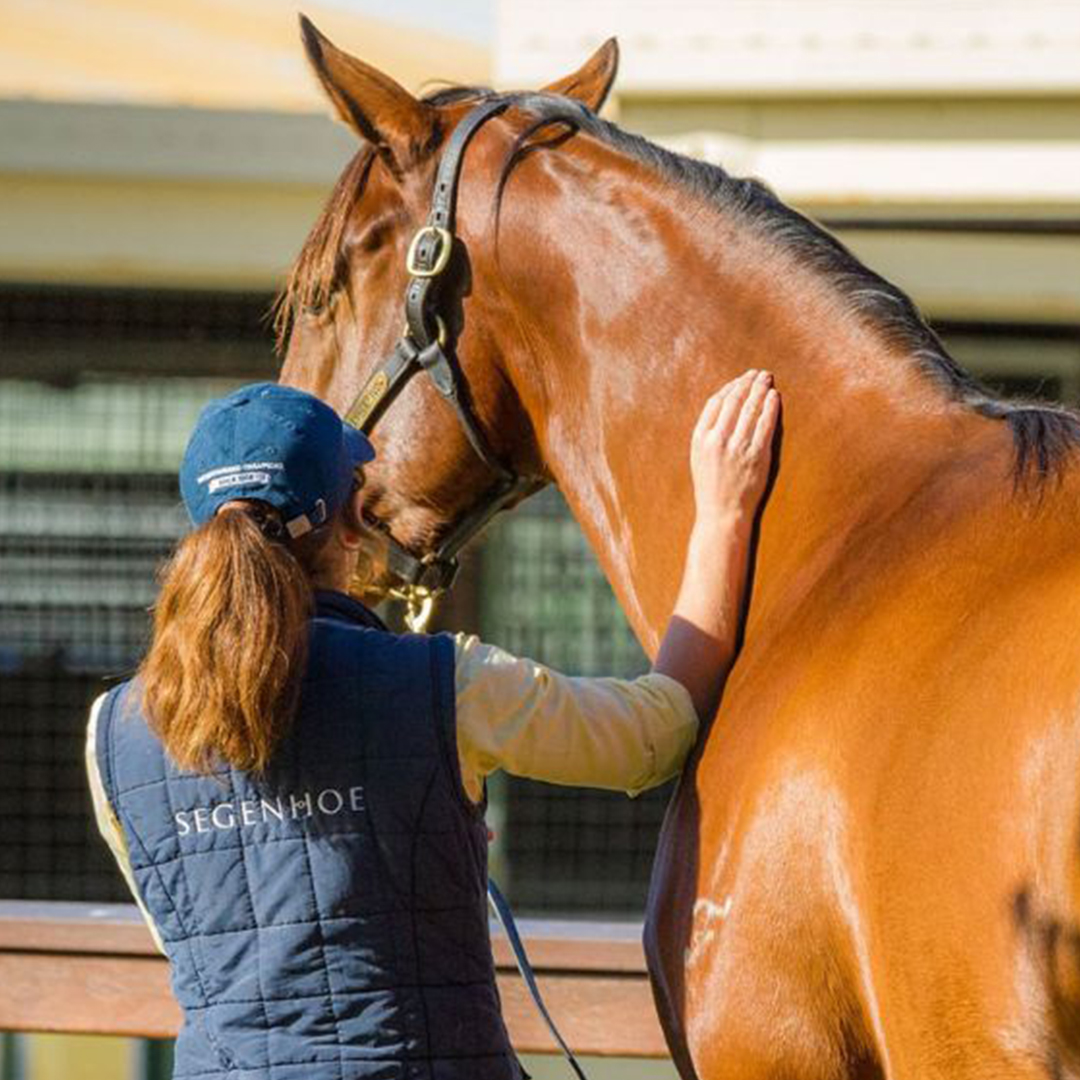 The art of the broodmare purchase